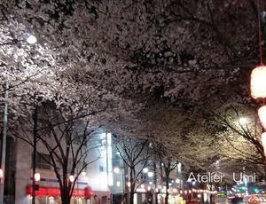 Yozakura1_2
